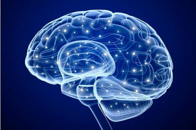 نقش مهم بخش غیرمنتظره ای از مغز در یادگیری و حافظه
