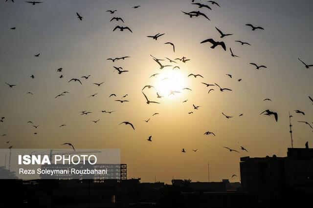 افزایش موقتی غلظت بعضی آلاینده ها در هوای تهران