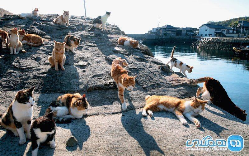 جزیره ای برای گربه ها در سرزمین دیدنی ژاپن!
