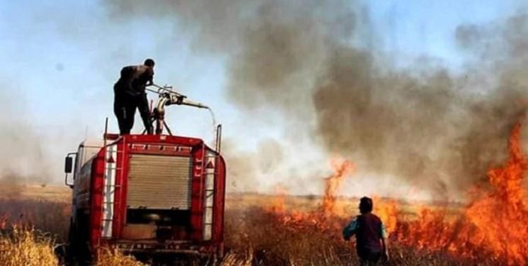 وزارت کشاورزی عراق: عناصر داعش به دنبال ضربه زدن به اقتصاد هستند