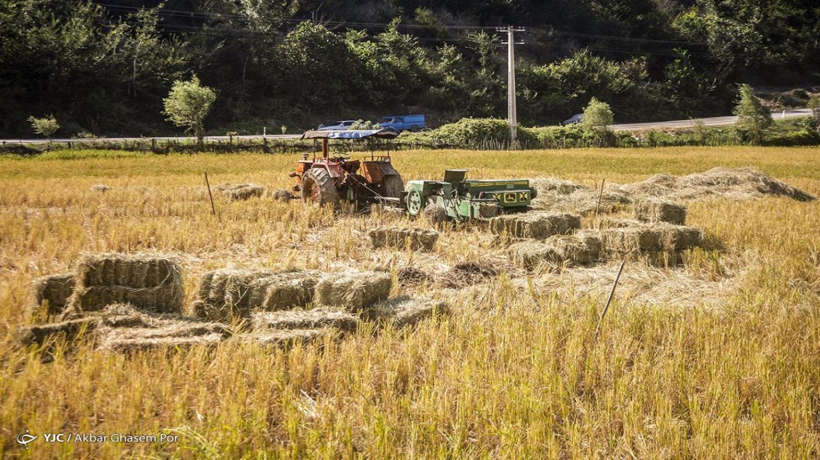 85 درصد مزارع کشور مکانیزه کشت می شوند