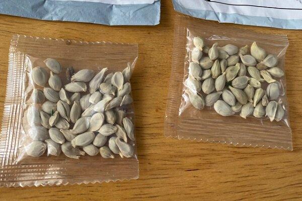 آمازون فروش بذرهای خارجی را ممنوع نمود