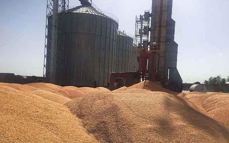 خبرنگاران میزان خرید تضمینی گندم در خلخال و کوثر افزایش یافت