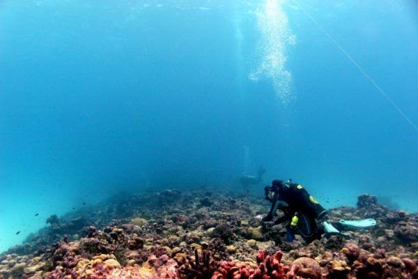 مقاومت بی سابقه مرجانها در اوج گرمایش زمین و تغییرات اقلیمی